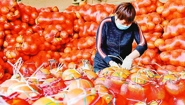 河南春节市场农产品供应充足